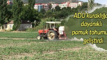 ADÜ kuraklığa dayanıklı pamuk tohumu geliştirdi
