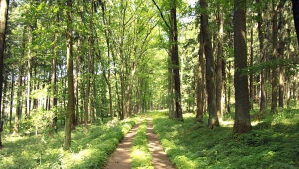 Orman yolu yaptırılacak