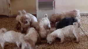 Bursa'da çiftliğe köpek baskını